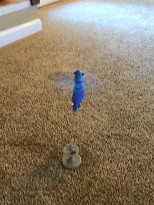 zippi-pets-flying-hummingbird-toy