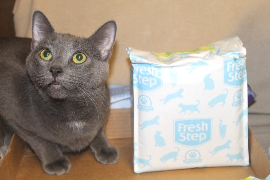 The Solution to Keeping Your Multi-Cat House Fresh Every Day + Giveaway