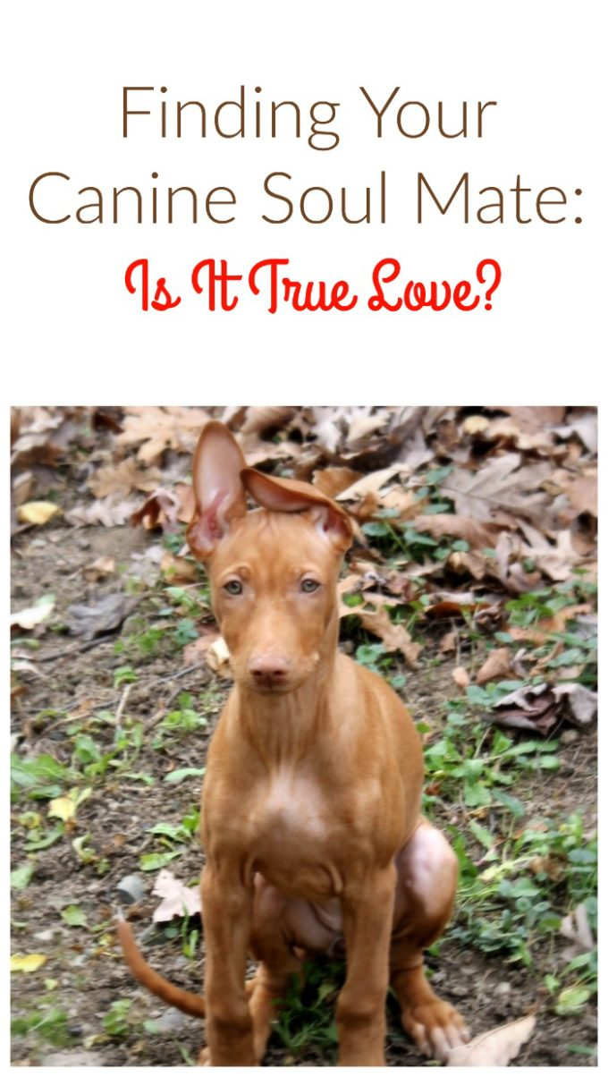 finding fido canine soul mate Finding Your Canine Soul Mate: How Do You Know When It's True Love?