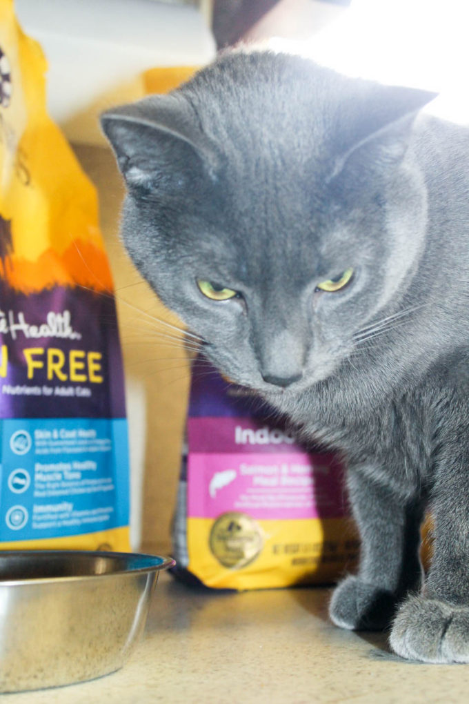 "Wellness Grain Free Cat Food 14 of 16 5 Kittytastic Ways to Make This ""The Year of the Cat"" #HealthyMeetsHappy"