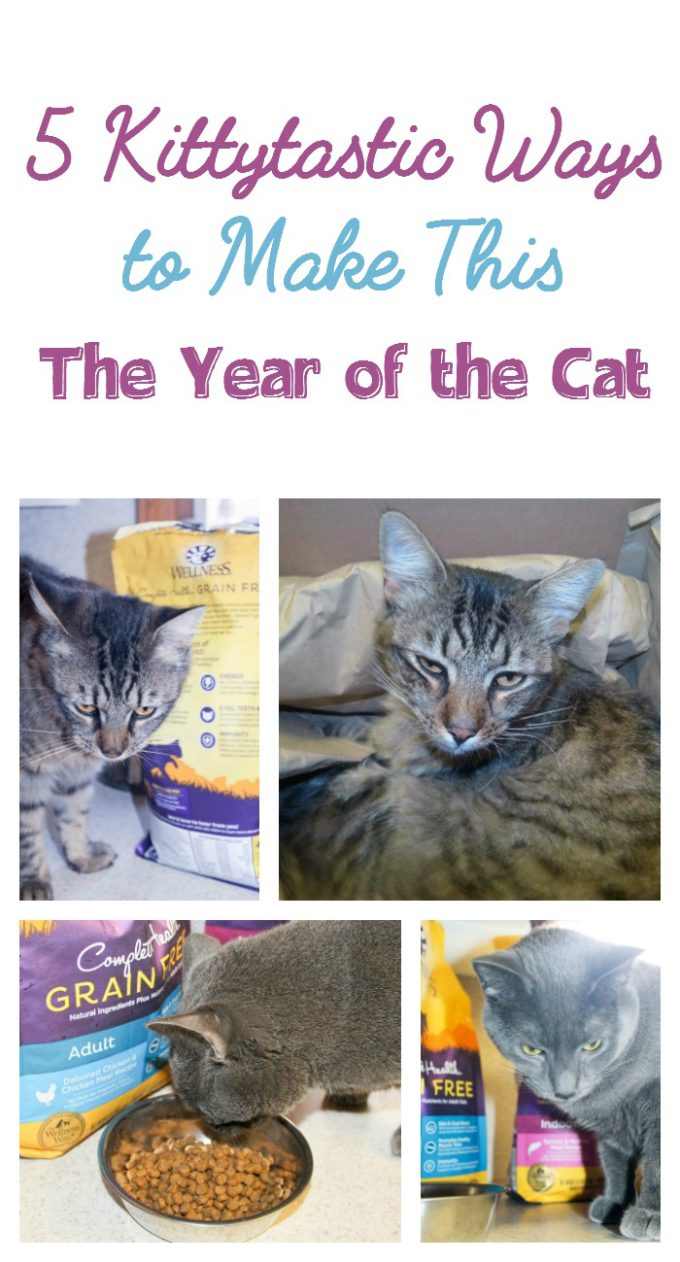 Make this the Year of the Cat with these five fab ways to pamper your kitty today and every day! This is where #healthymeetshappy!