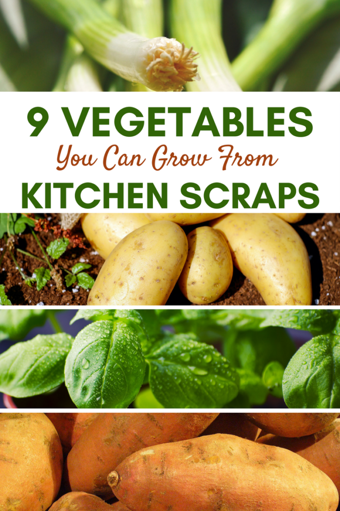 9 Vegetables You Can Grow From Kitchen Scraps