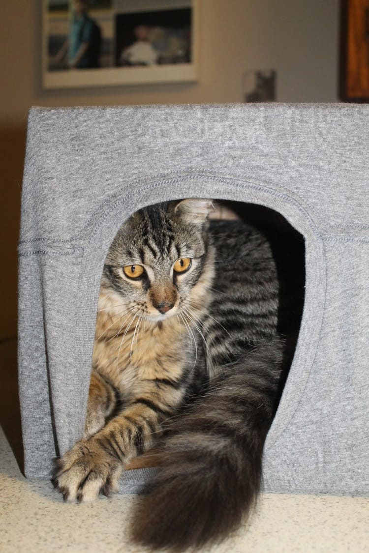 Alex Tshirt Cave It's a Jungle In Here: 5 Tips for Creating a Harmonious Pet-Friendly Home