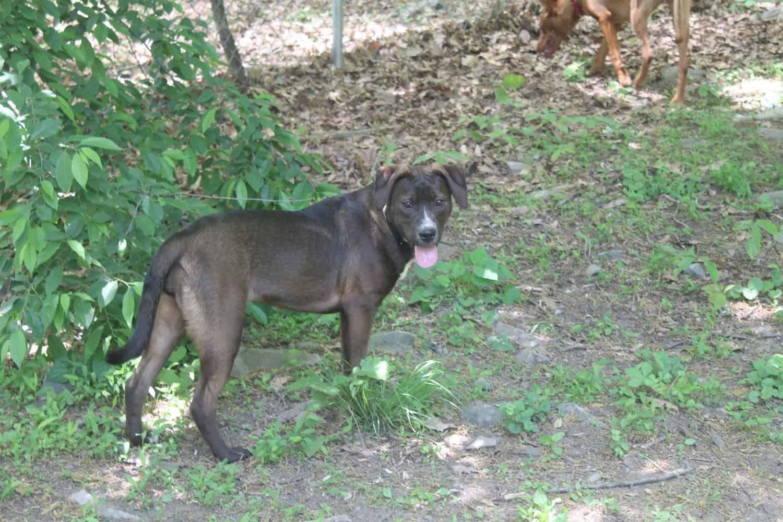We Got a New Puppy! Meet Mocha!