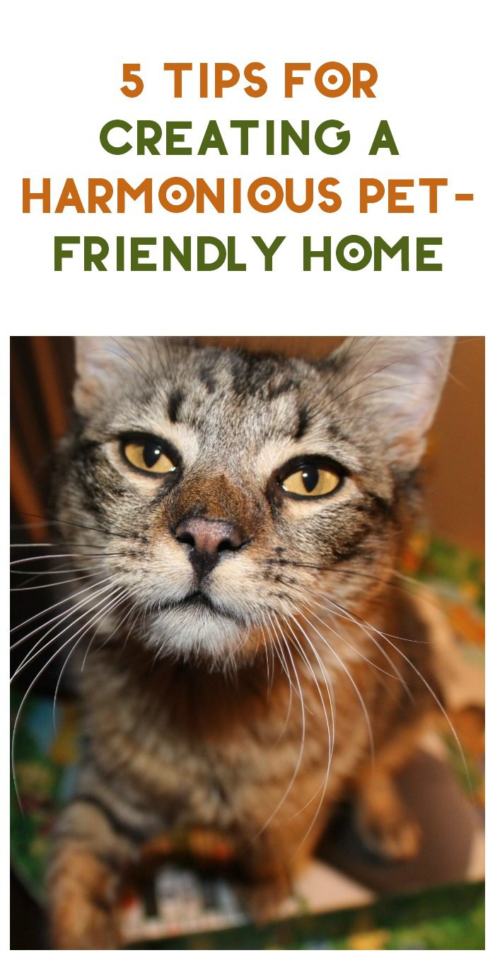 It's a Jungle In Here: 5 Tips for Creating a Harmonious Pet-Friendly Home