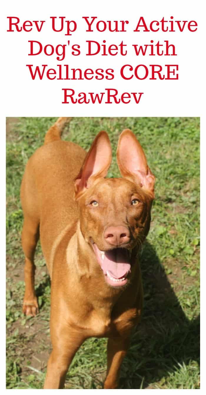 Active dogs need a diet that supports their bones, muscles and joints! Check out how we revved up Freya's diet with Wellness CORE RawRev!