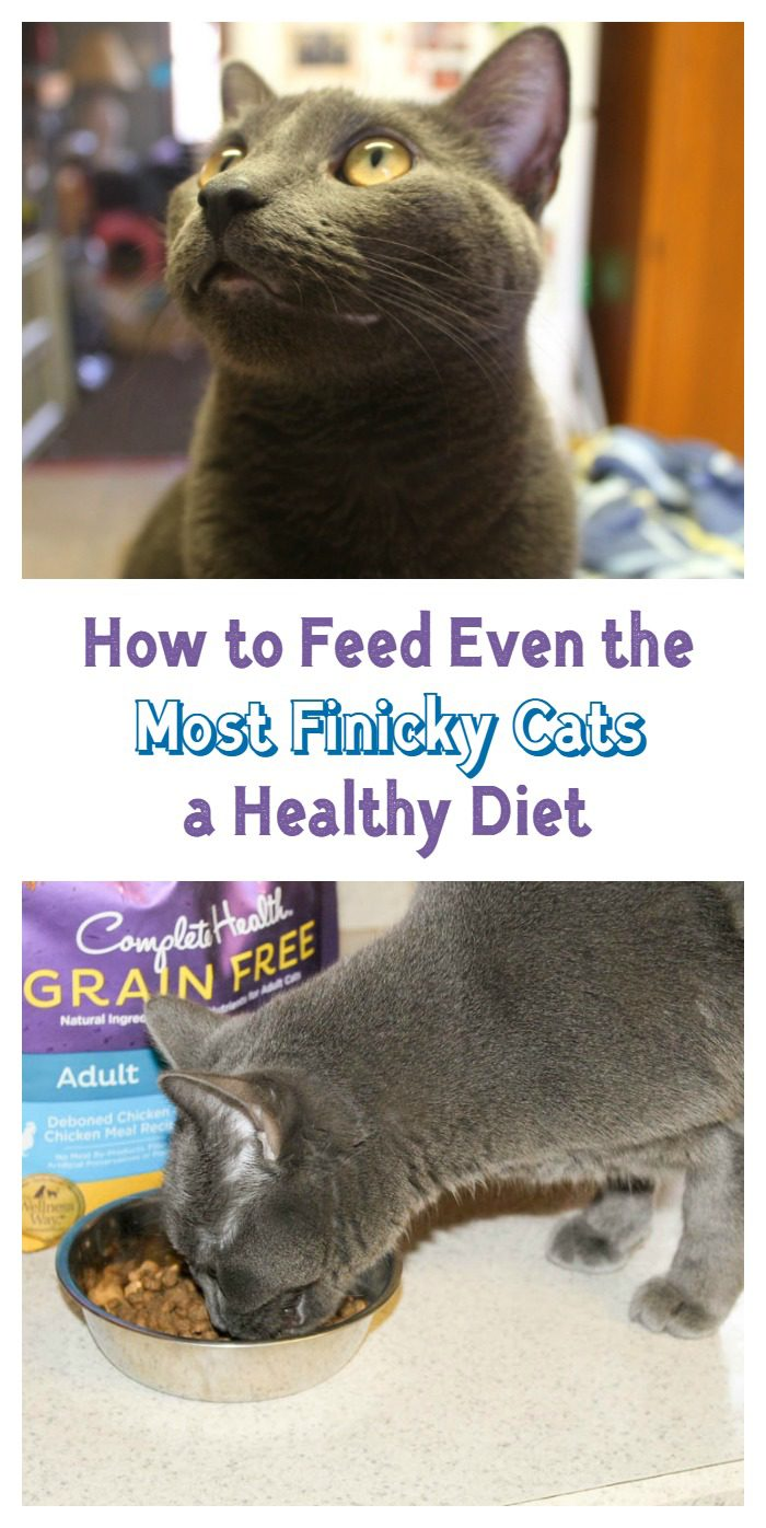 Check out how easy it is to feed even the most finicky cat a healthy diet with Wellness® Complete Health cat food!