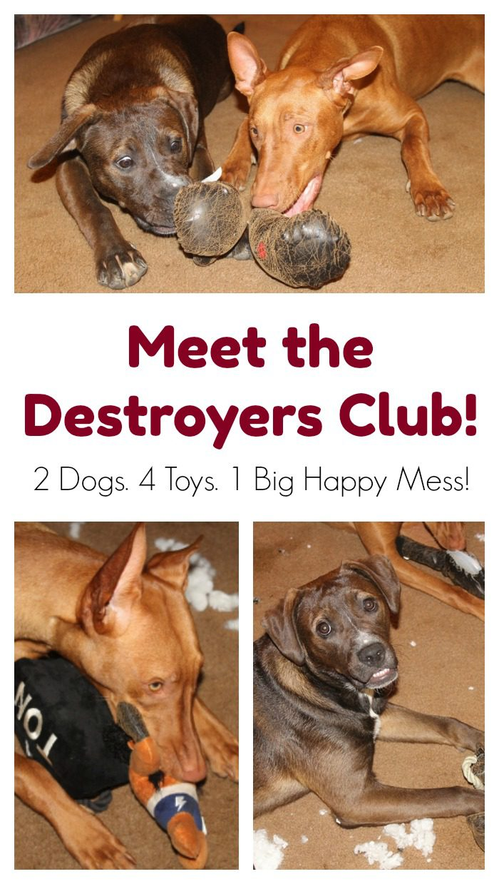 Bark Shop Destroyers Club Dog Toys for Aggressive Chewers