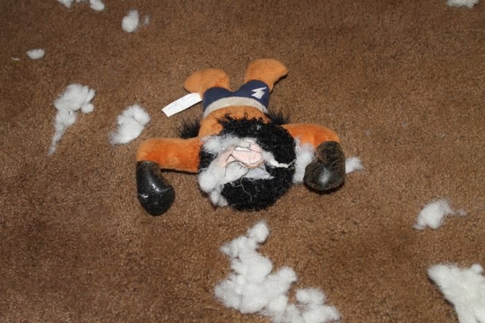 Furricane Floyd lost his head Celebrate Your Dog's Inner Destroyer with BARK Destroyers Club!