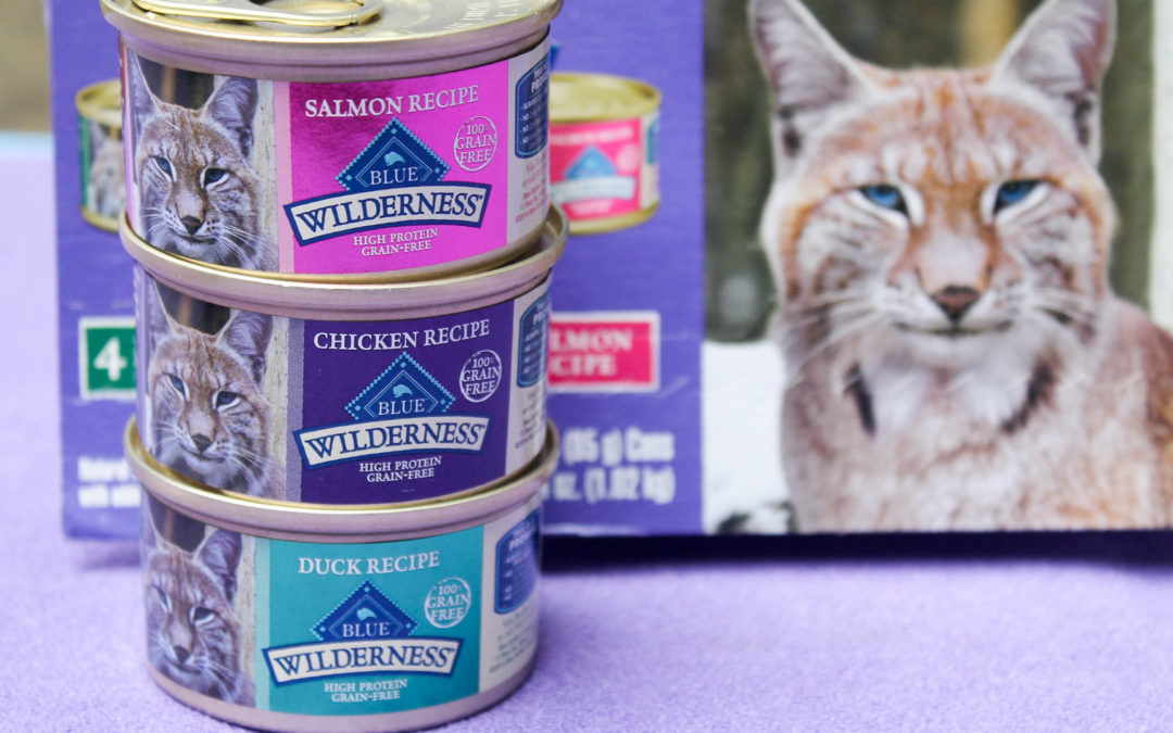Why Should You Feed Your Cats Canned Food?