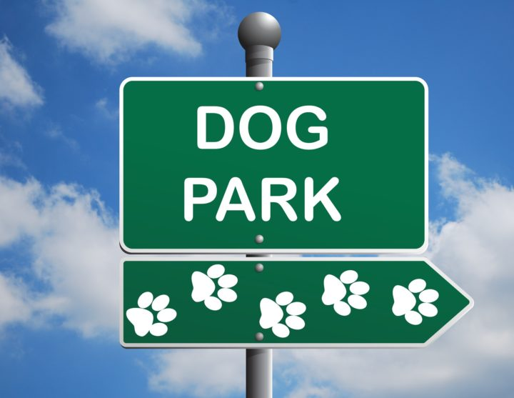 Dog Park Rules 3 What Not to Do When Taking Fido to the Dog Park