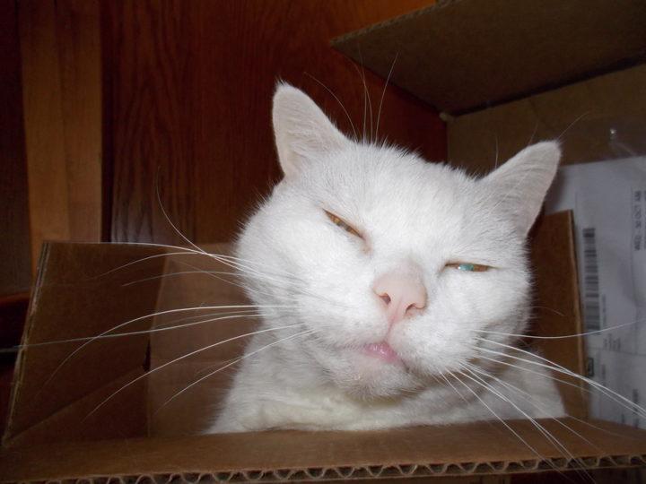 Mally in a Box Half of My Life, I Had a Cat Named Malkav