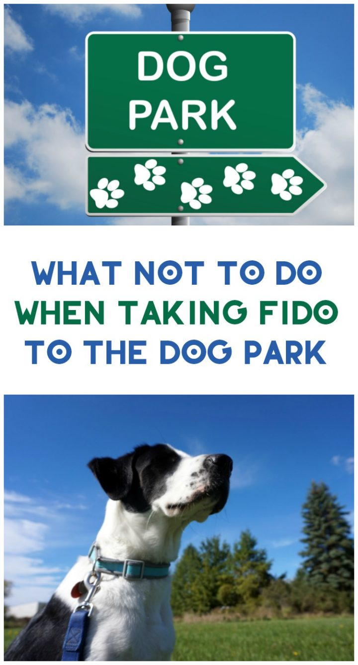 dog park rules What Not to Do When Taking Fido to the Dog Park