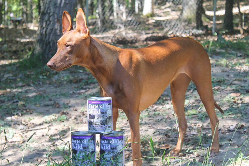 Taste of the Wild Canned Food Chewy 4 of 6 3 Things I Learned From Vet About My Itchy Dog