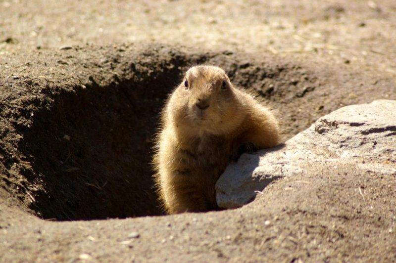 groundhog day 90+ Things to Write About in February (Blogging & Journal Prompts)