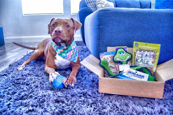 Treat your furry friend to fun surprises every month with these 10 pet subscription boxes that your cats and dogs will absolutely love! Let's check them out!