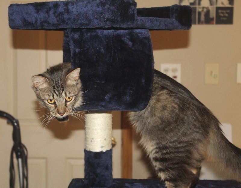 Wikibuy Cat Condo Alex a How Does WikiBuy Save You Money?