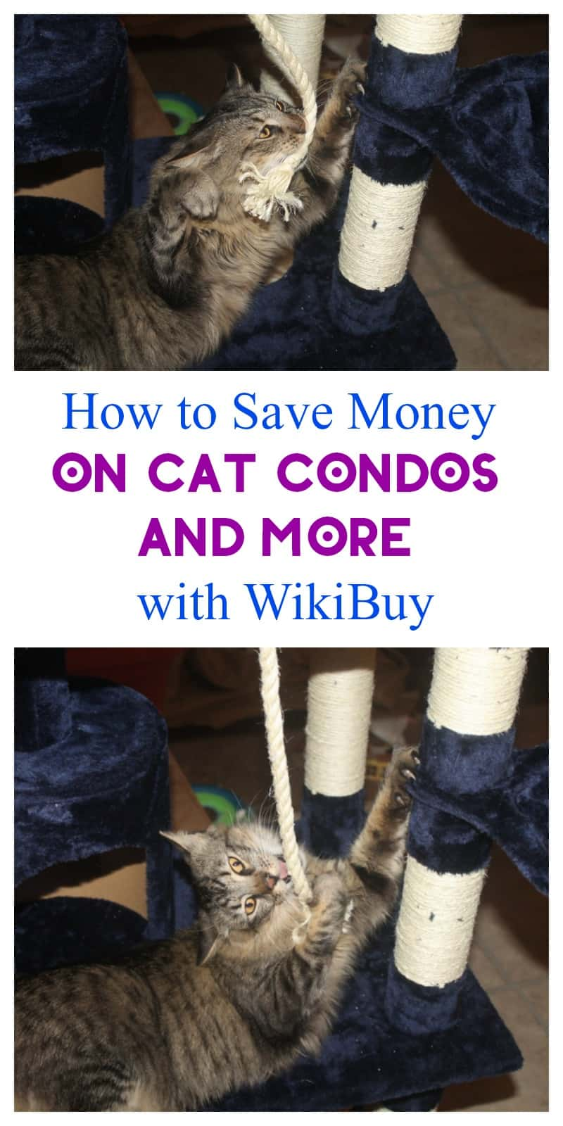 Want to make sure you're getting the best deal on everything from cat condos to curling irons? You'll love WikiBuy! Check out how I use it to save money!