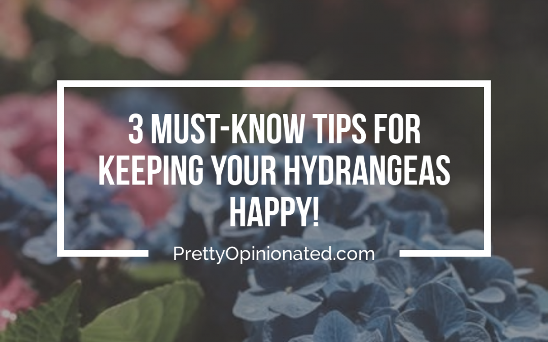 Keeping Your Hydrangeas Happy: Tips For Well-Meaning Gardeners
