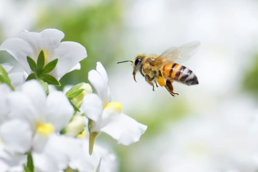 How To Protect the Pollinators By 'Bee'-ing a Good Home Gardener