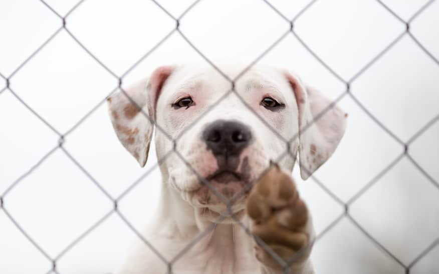 Why You Should Adopt A Senior Pet