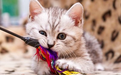 How To Kitten-Proof Your Home in 4 Easy Steps
