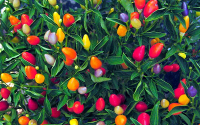 5 Edible Plants That Double as Decor