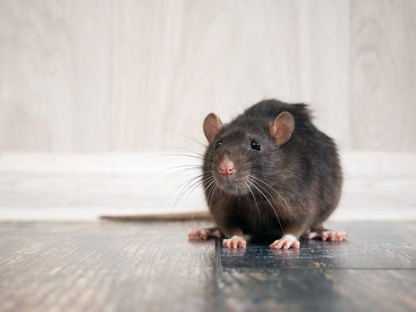 197233682 Subscription S Pests Begone: Here's How to Keep Insects and Rodents Away This Season