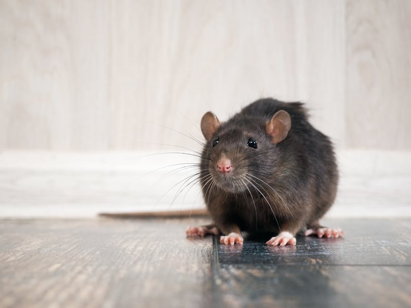 Pests Begone: Here's How to Keep Insects and Rodents Away This Season