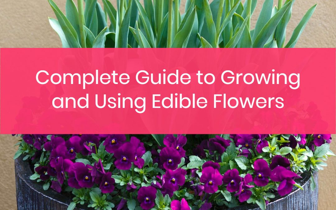 Everything You Need to Know about Growing and Using Edible Flowers