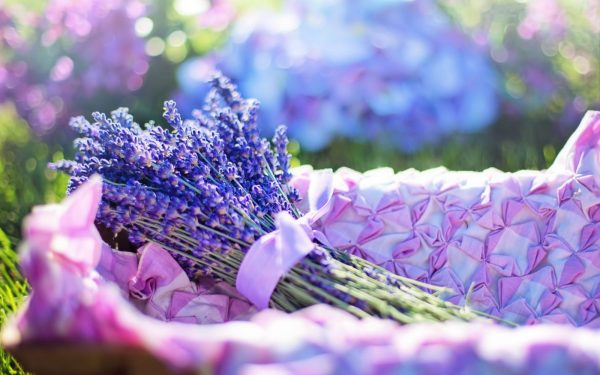 Lavender has many uses around the home, including as parts of recipes. English lavender varieties (Lavender angustifolia) have the best flavor for recipes, which range from sweet to savory.