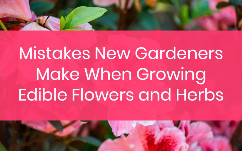 Mistakes New Gardeners Make When Growing Edible Flowers and Herbs