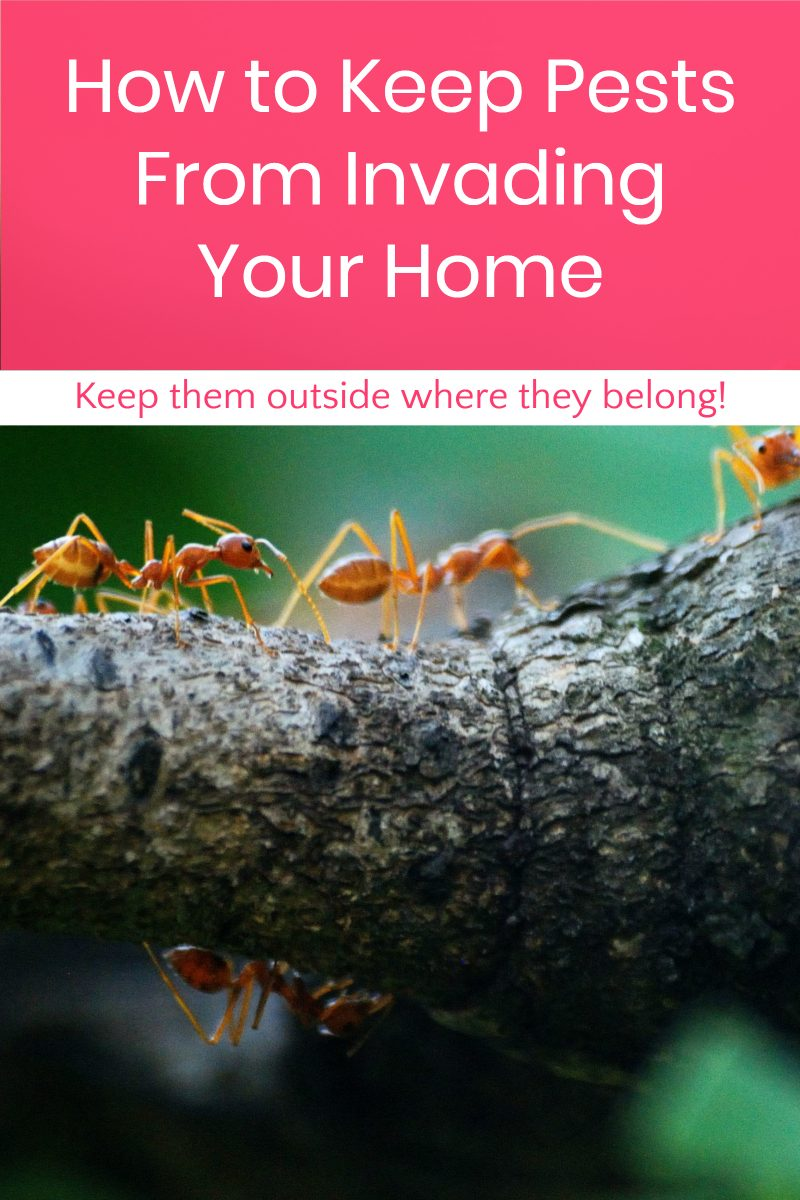 How to Keep Pests from Invading Your Home