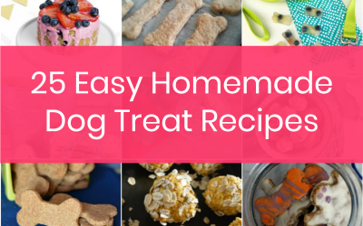 25 Easy Homemade Dog Treats Recipes Your Pooch Will Devour