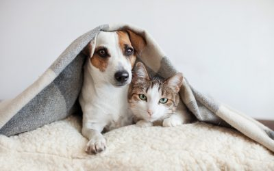 3 Simple Ways to Keep Your Pets Healthy