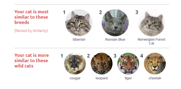 Basepaws breed similiar What Can You Learn About Your Cat From the BasePaws DNA Kit?
