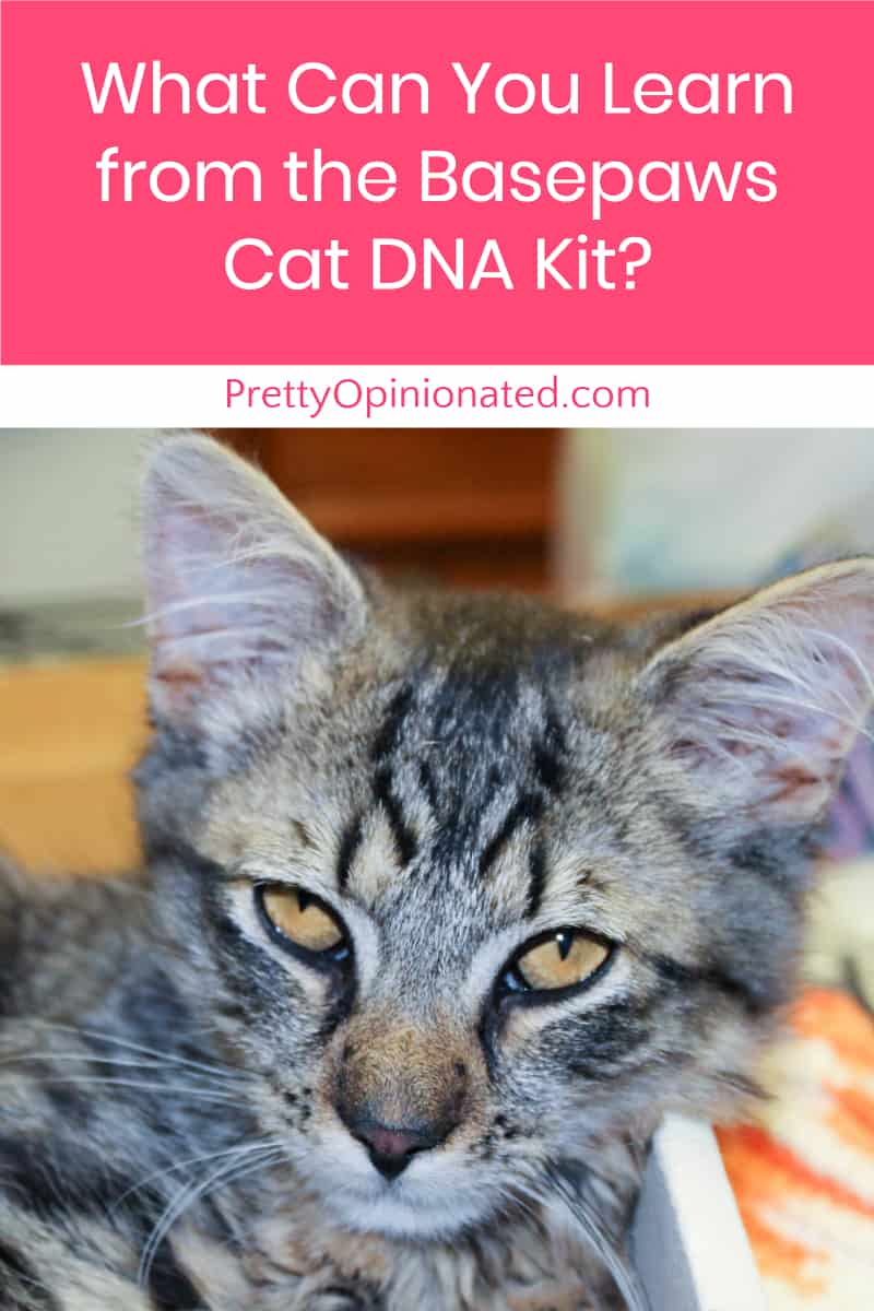 Wondering what you can learn from the Basepaws cat DNA kit? Find out what to expect when you send in your kitty\'s DNA!