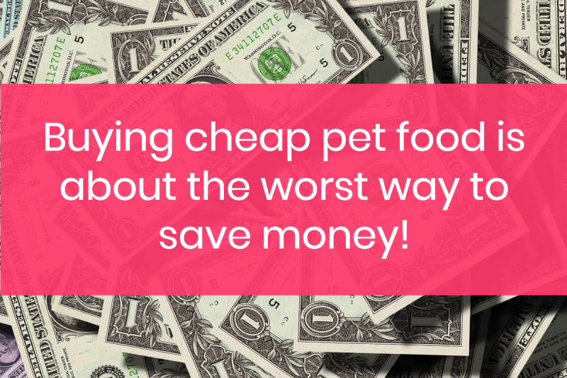 cheap pet food 10 Ways You're Wasting Money (Even When You Think You're Saving It)