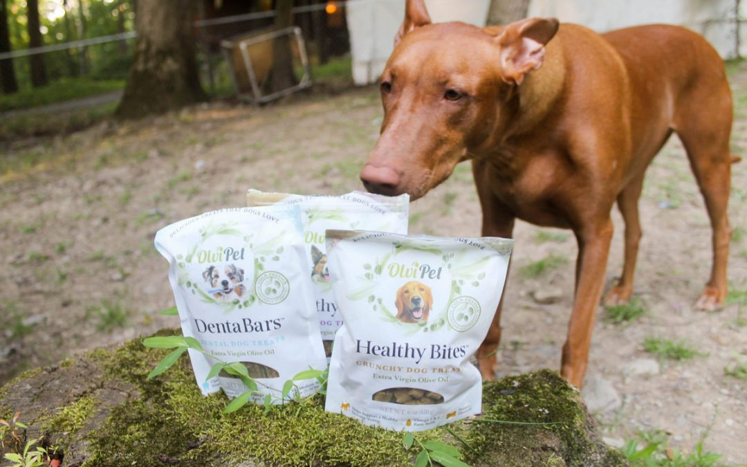 5 Reasons to Give Your Dog Olive Oil (Plus Freya's Favorite Olive Oil Treat!)