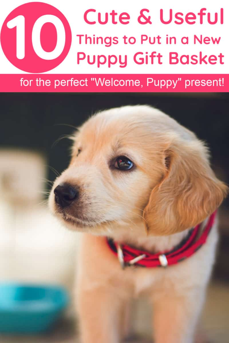 Whether you\'re bringing home a new dog yourself and looking for things to buy that you may have forgotten or planning a new puppy gift basket for someone else, I\'ve got you covered! Read on for ten things that every new dog parent needs (but may not even realize it).
