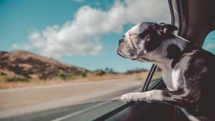 How to Make Moving With Pets a Lot Less 'Ruff'