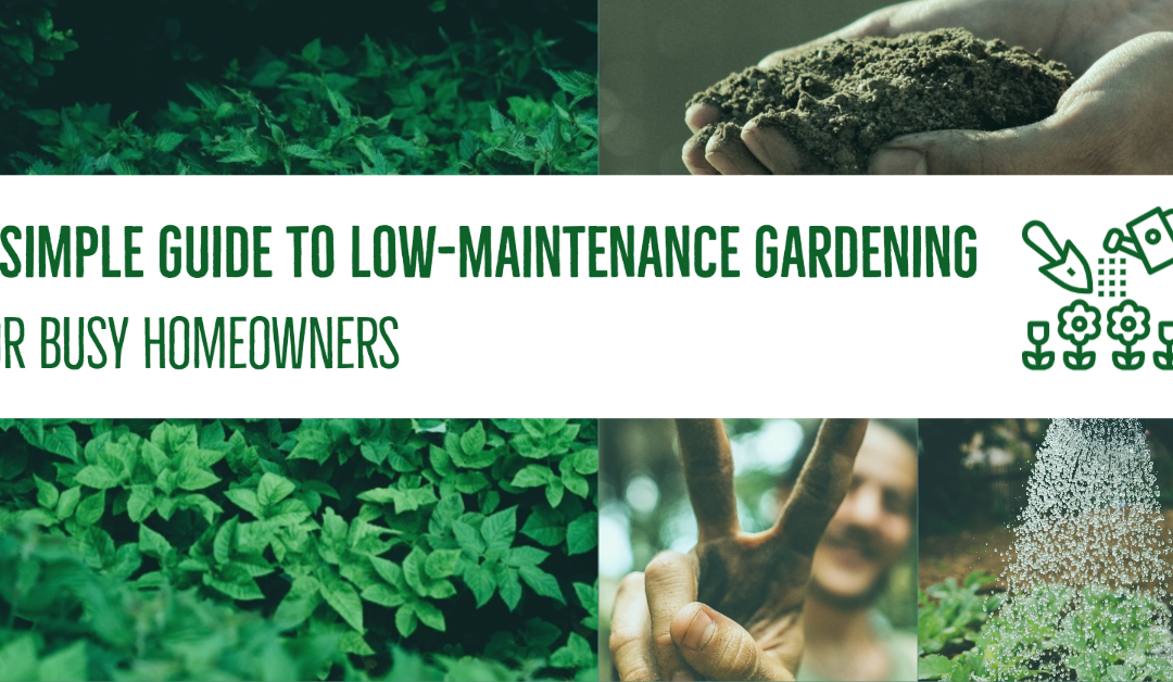 A Simple Guide to Low-Maintenance Gardening for Busy Homeowners