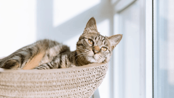 Tips to Help You Protect Your Furry Friends from Poor Air Quality