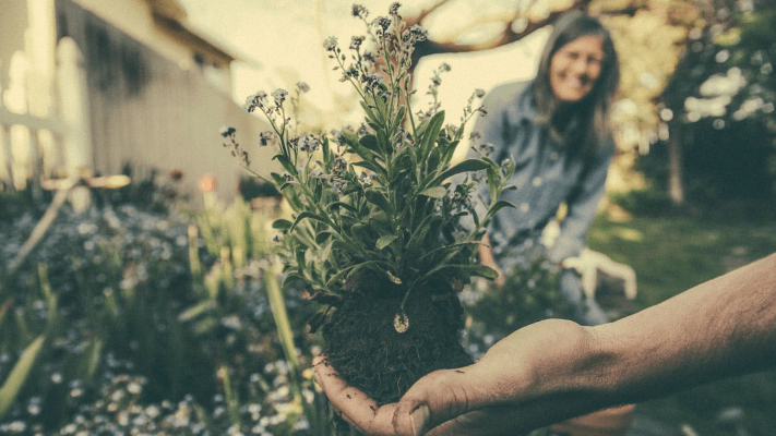gardening Gardening Tips For Beginners: How to Make Your Outdoor Space Look Stunning