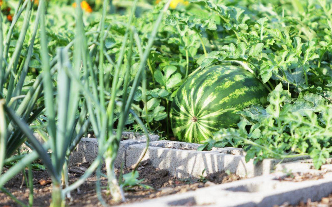 How to Use Cinder Blocks to Make a Raised Garden