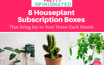 8 Flower & Houseplant Subscription Boxes That Bring Joy to Your Home Each Month