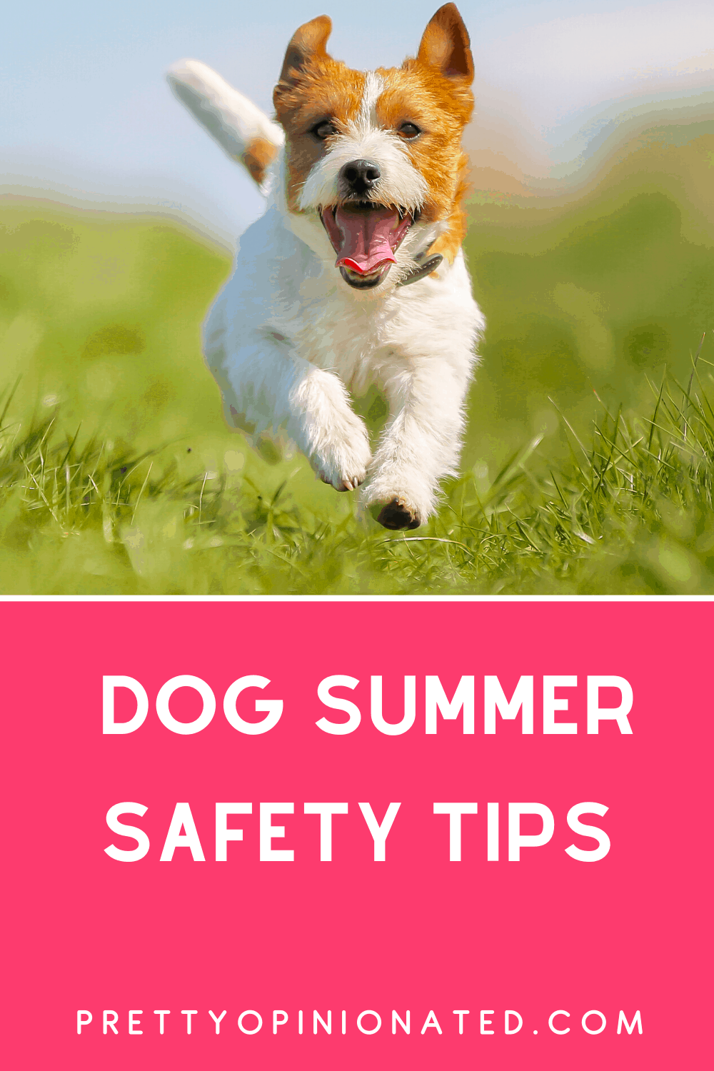 Tips for Keeping Your Dog Safe This Summer