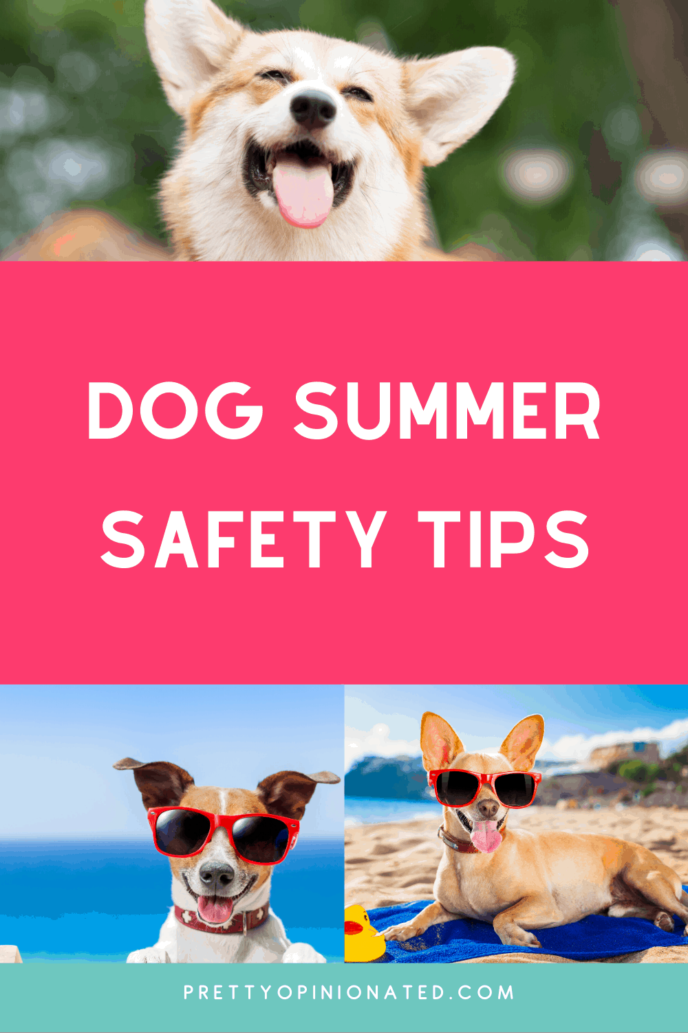 Here are a few key tips to help you keep your dog safe this summer.