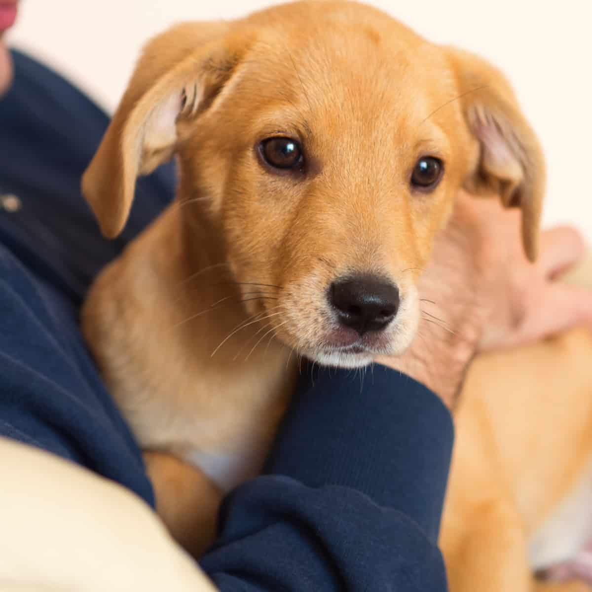Consider These Things Before Getting a Dog