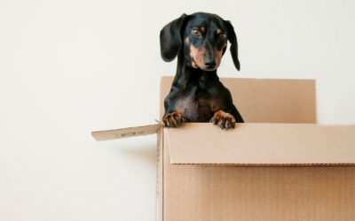 How to Make Money and Pack Efficiently When Moving